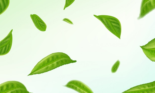 Realistic isolated tea leaves circling background