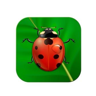Realistic ladybug on leaf icon