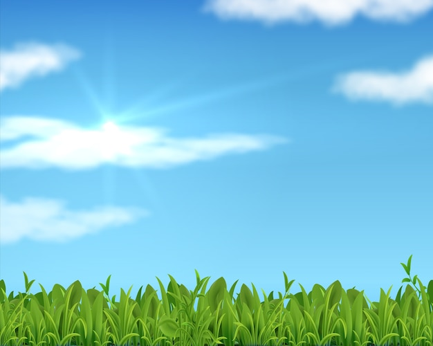 Realistic lawn and sky. 3d spring grass background with sun and clouds.