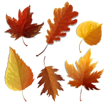 Realistic leaves collection