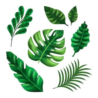 さまざまな形のリアルな葉