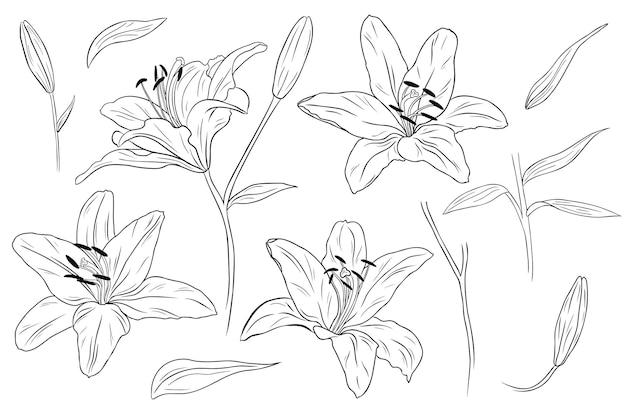 현실적인 백합. 꽃, 잎 및 가지. 손으로 그린 그림. 단색 흑백 잉크 스케치. 라인 아트. 흰색 배경에 고립. 색칠 페이지.