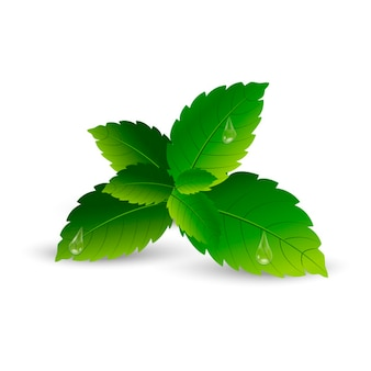 Realistic mint leaves with soft shadow