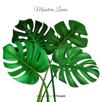 Realistic monstera background