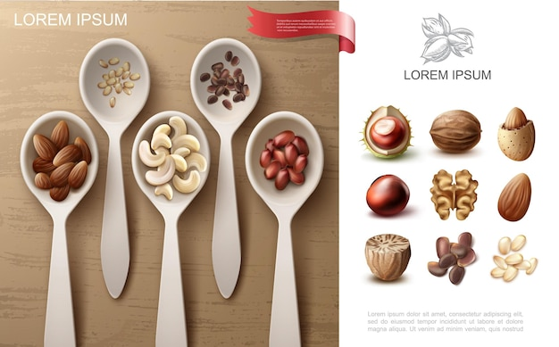 Realistic natural nuts colorful concept with cashew almond peanut and pine nuts in spoons