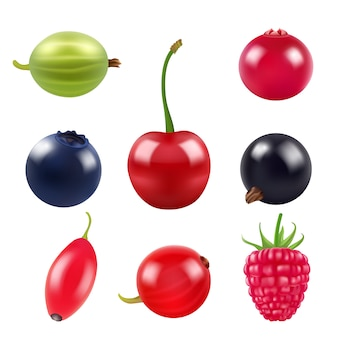 Realistic pictures of berries.