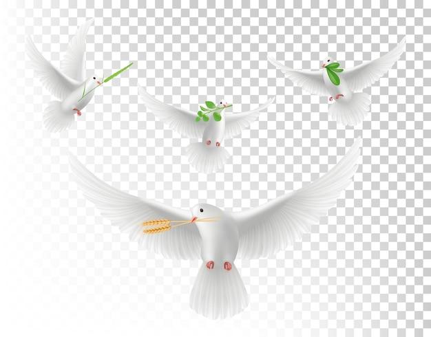 枝のあるリアルな鳩。白い空飛ぶ鳩の孤立したセット。緑の枝とイラストリアルな鳩