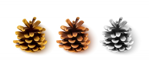 Realistic pine cones isolated on a white background.  illustration