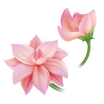 현실적인 핑크 꽃 연꽃 꽃잎