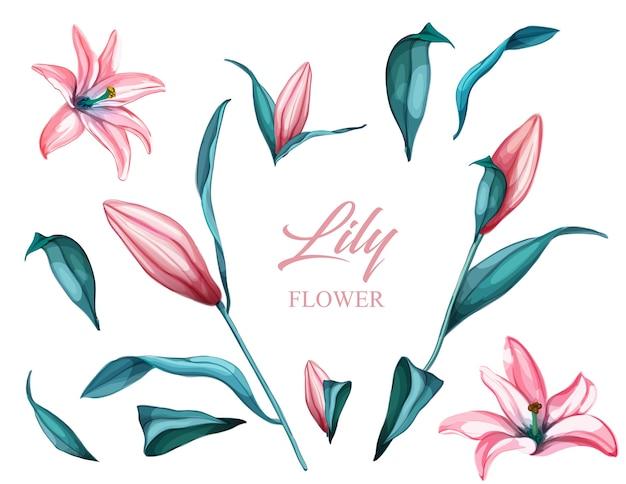 現実的なピンクのユリの花セット。花、葉、さまざまなビューからの茎セットom。花柄セット。