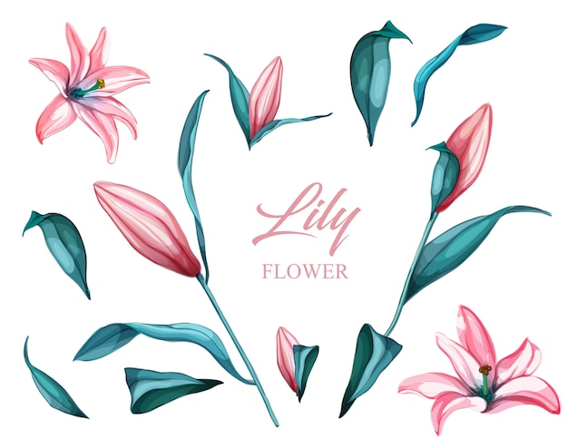Realistic pink lily flower set. blossoms, leaves and stem from various view set om.  florals set.