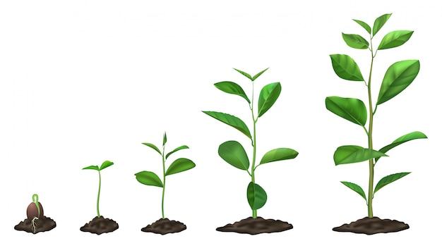 現実的な植物の成長段階。地面で育つ若い種子、土壌で緑の植物、春の芽の開花段階、イラストセット。発芽芽のタイムライン、庭の苗のプロセス