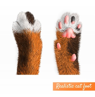 Realistic pretty cat foot top and bottom view set isolated illustration