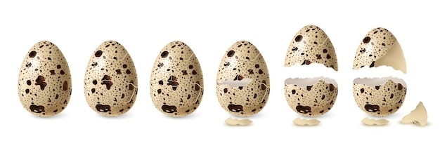 リアルなウズラのひび割れと開いた卵セットの孤立したイラスト
