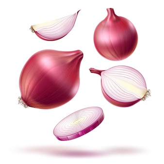 Realistic red onion whole bulb, slices mix