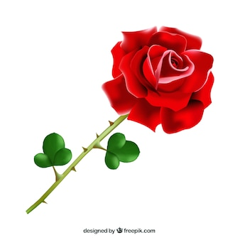 Realistic red rose