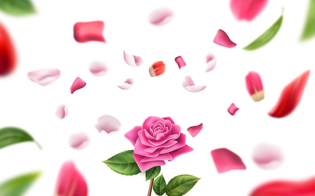 Realistic rose on blurred rose petal and leaves background