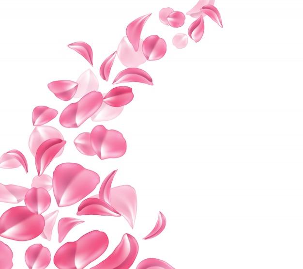 Realistic rose, cherry, sakura petal wave