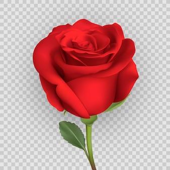 Реалистичный дизайн розы, изолированные на фоне