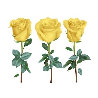 Реалистичная роза на фоне, иллюстрация