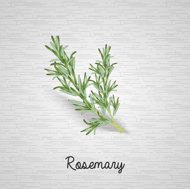 Realistic rosemary leaves illustration