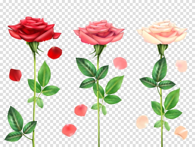 Realistic roses set