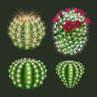 Realistic round cactus icon set vector isolated
