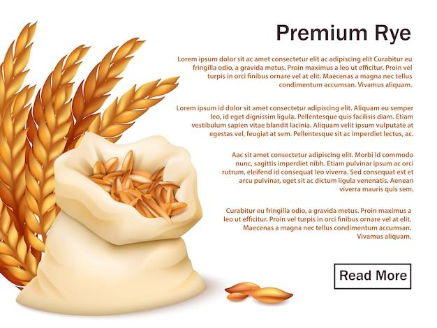 現実的なライ麦、耳、白で隔離される穀物