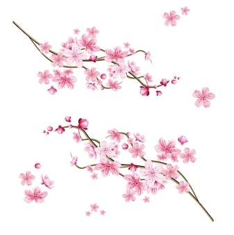 현실적인 사쿠라 나무 가지. 우아한 일본 상징. 핑크 꽃 꽃잎과 개화 식물 나뭇 가지입니다. 아시아 문화 상징. 꽃 봄 디자인 장식.
