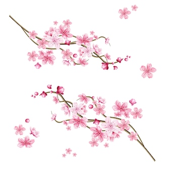 Realistic sakura tree branch. elegant japanese symbol. blooming plant twig with pink flower petals. asian cultural symbol. floral spring design decoration.