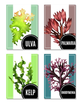 Realistic sea weeds illustrations set