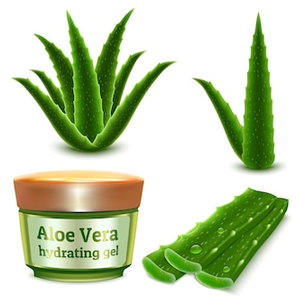 Realistic set of aloe plant and cosmetic hydrating gel product