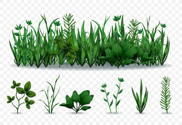 Реалистичный набор отдельных зеленых трав и лугов с различными травами, изолированных на прозрачном фоне иллюстрации