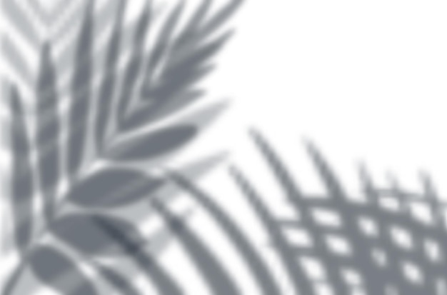 Realistic shadow overlay effects mockup top view composition with exotic leaves shadows on wall Free Vector