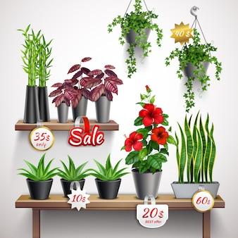 Реалистичная магазинная полка с комнатными растениями и цветами