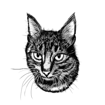 Realistic sketch cat. realistic sketch flower.