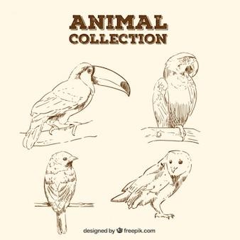 Schizzi realistici di uccelli