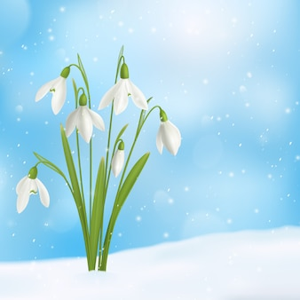 Realistic snowdrop flower snow composition with bunch of flowers grown through snow surface with snowflakes sky  illustration