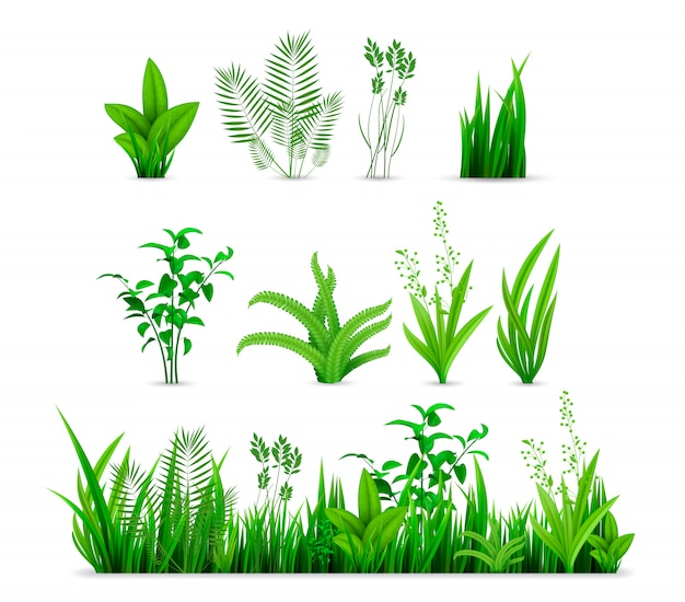 Realistic spring grass set collection