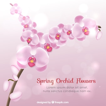 Realistic spring orchid flowers
