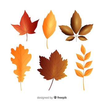 Realistic style autumn leaves collection