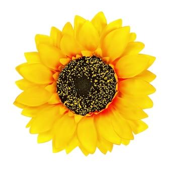 Реалистичный цветок подсолнечника изолированных иллюстрация
