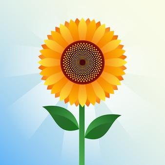 Realistic sunflower