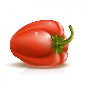 Realistic sweet pepper