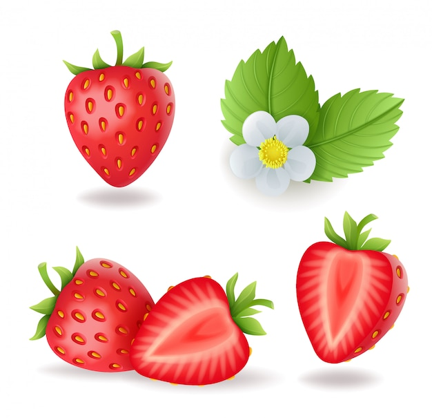 Realistic sweet strawberry set with leaves and flowers, fresh red berries, isolated illustration.