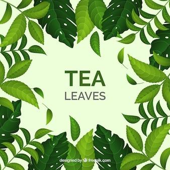 Realistic tea leaves background