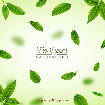 Realistic tea leaves background