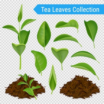 Realistic tea leaves transparent set