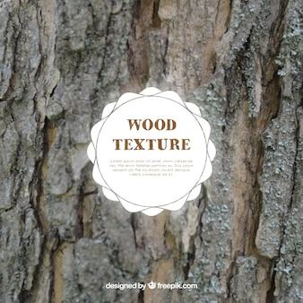 Реалистичные текстуры ствола дерева