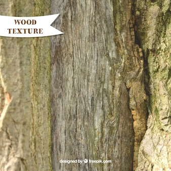 Realistic texture of trunk wood